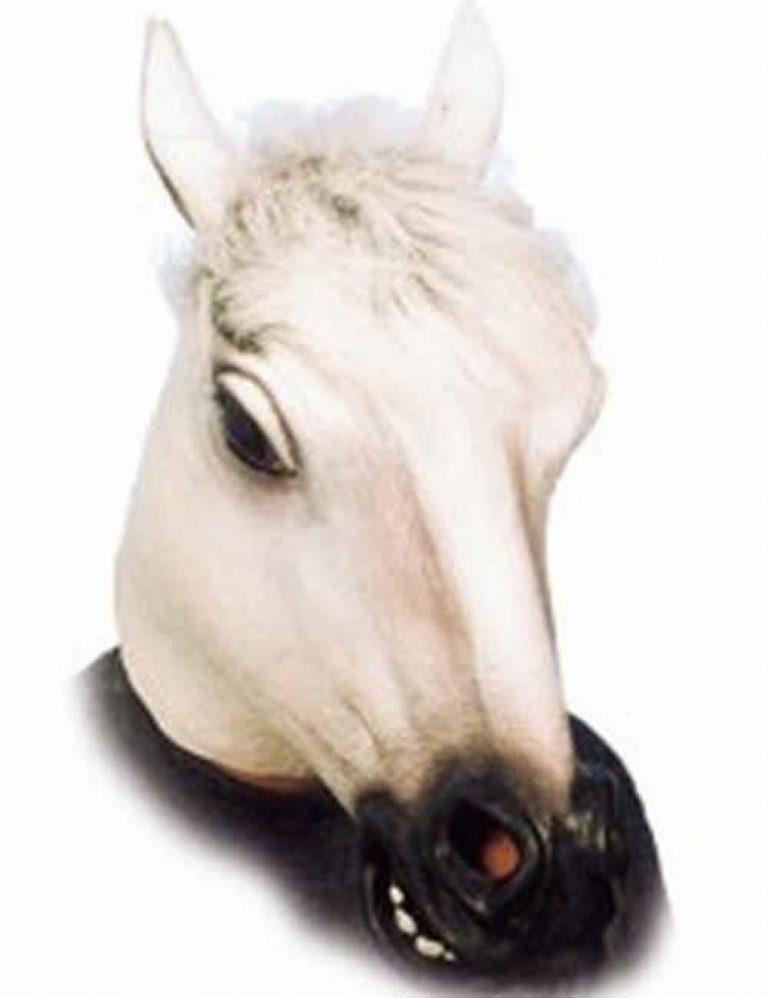 Masker paard schimmel