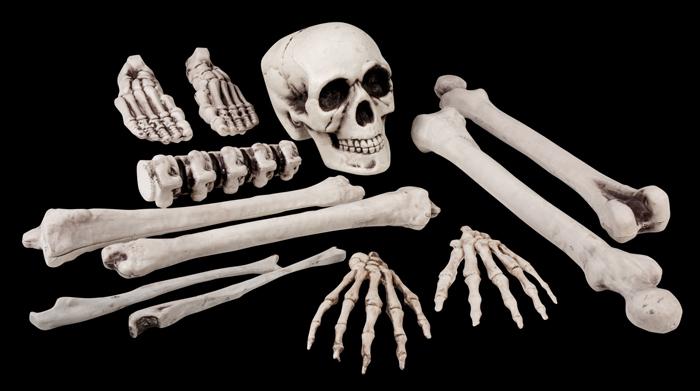 Skelet onderdelen groot